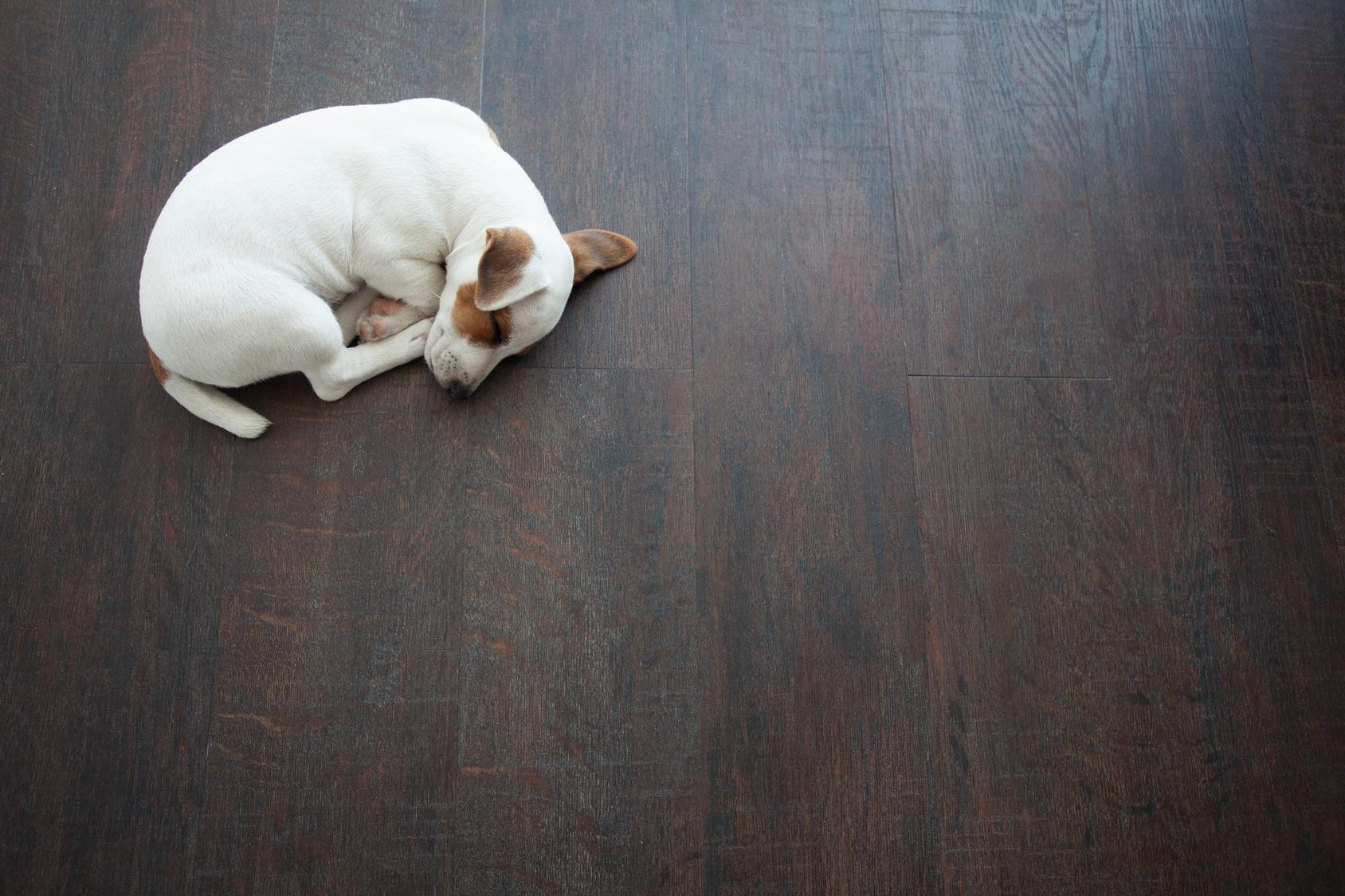 Pets and hardwood flooring coexisting