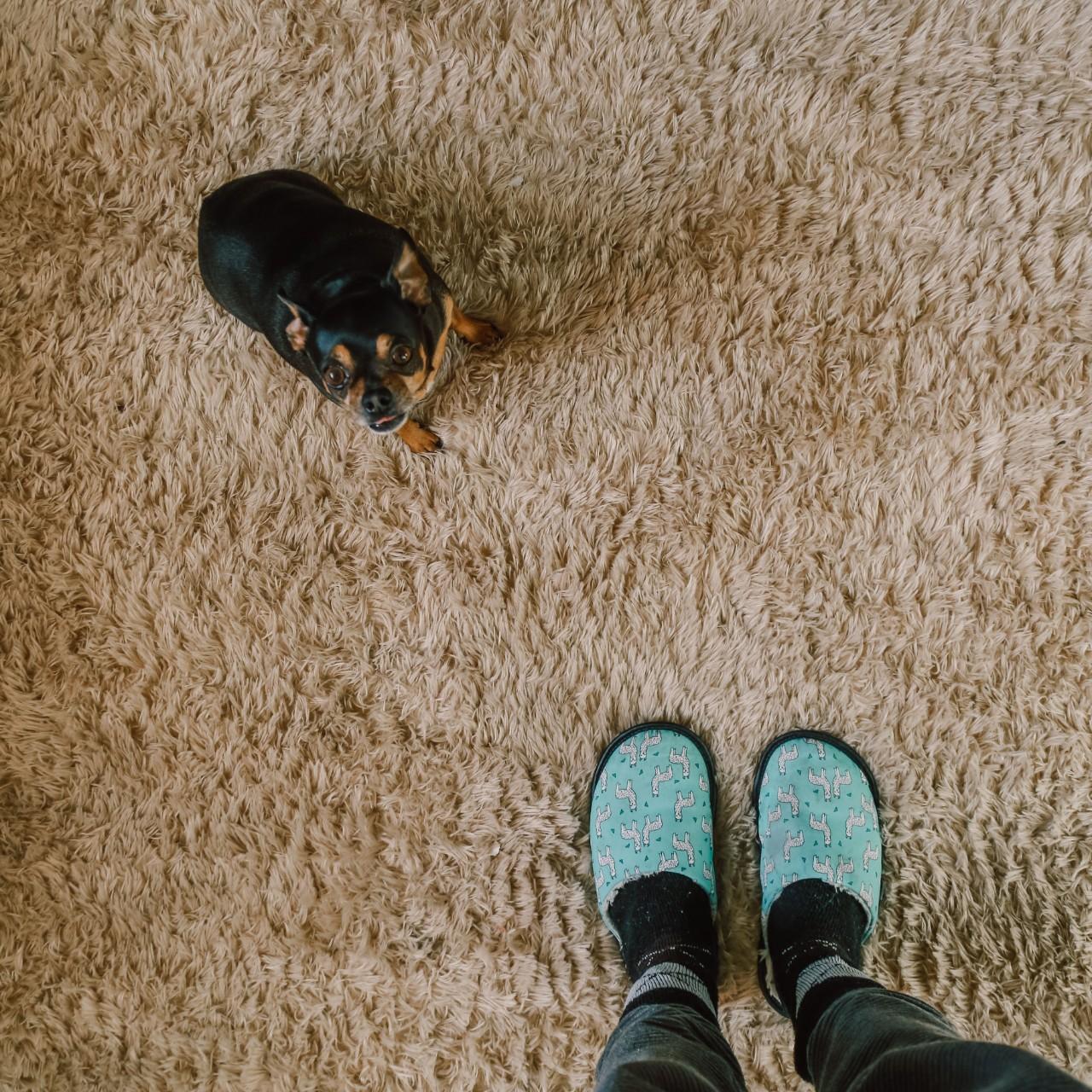 Pet safe carpet from Diverse Flooring in Maple Ridge, BC, Canada