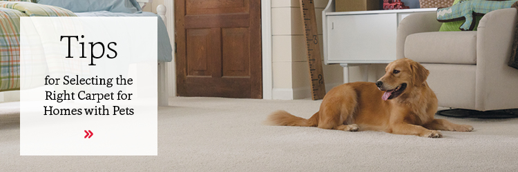 Tips for Selecting Carpet for Pets