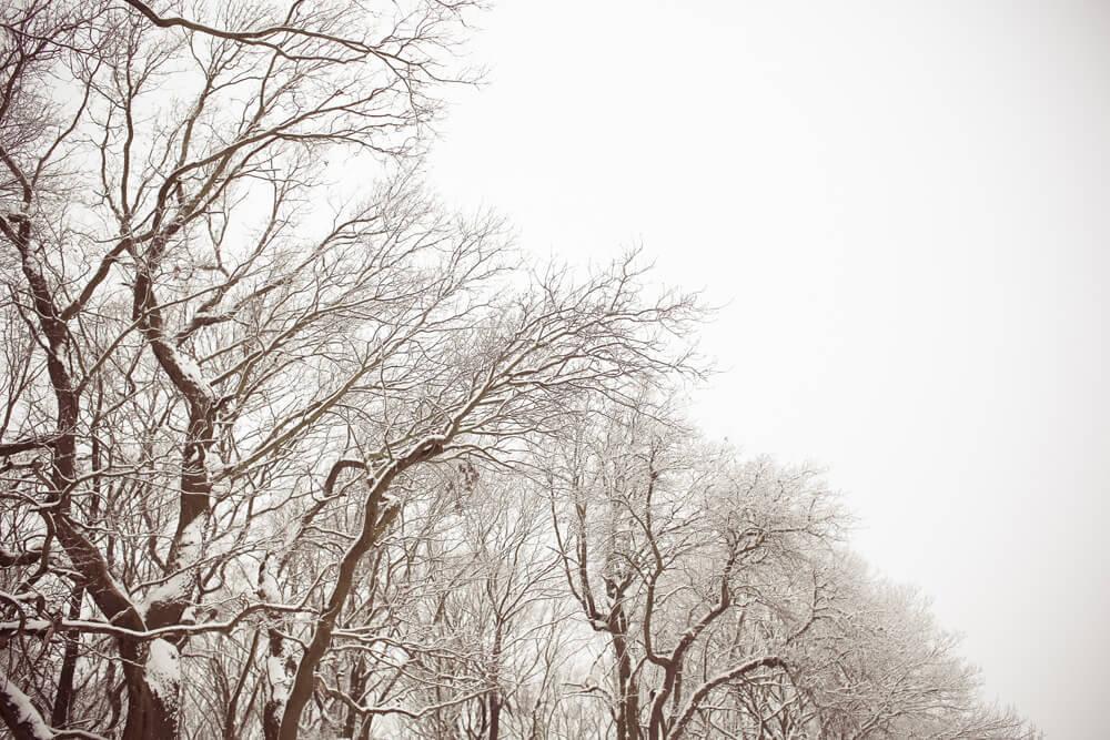 trees-864992
