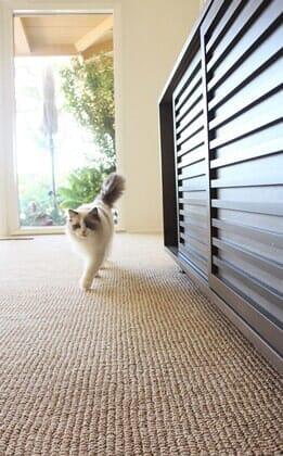 Cutest cat in San Diego area struts across freshly laid berber carpet by Metro Flooring