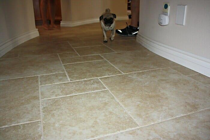 Cute pug on a tile floor near San Diego CA