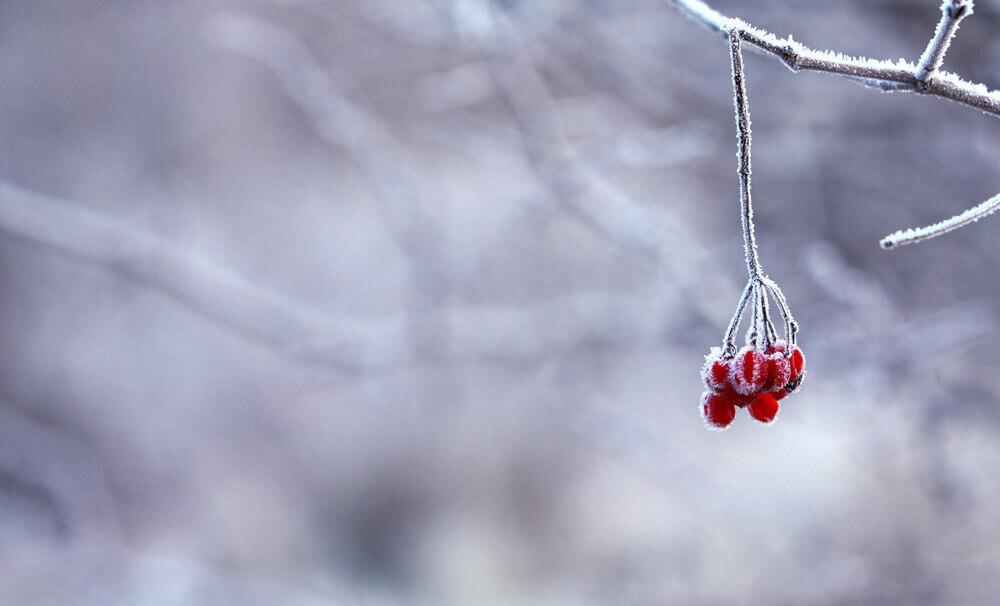 frozen-201495_1920