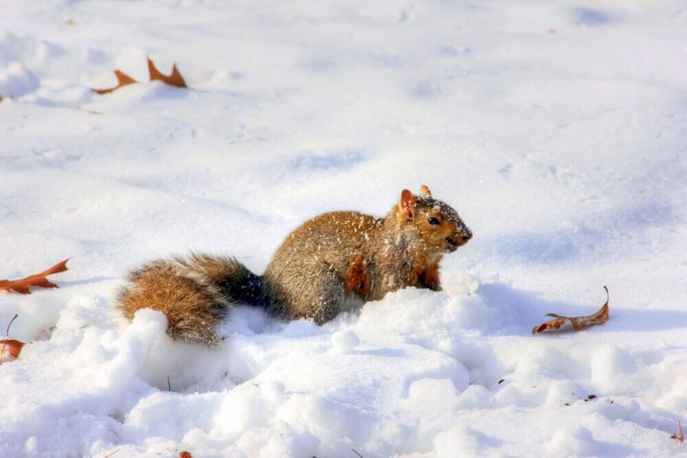 squirrel-230621