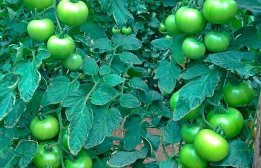INBIOMA - Fertilizantes