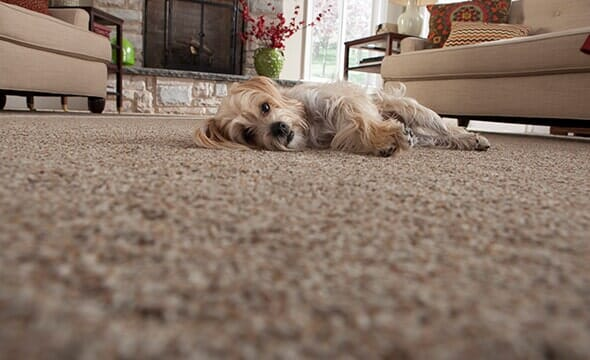 Plush Carpet from Creative Floors in Casselberry and Orlando FL