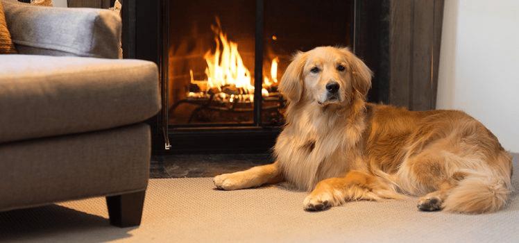 dog sitting next to a fireplace