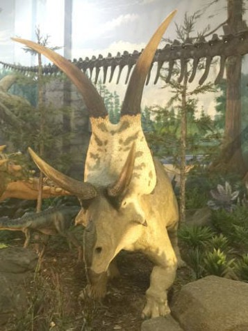 Museum of Dinosaurs & Ancient Cultures, The Dinosaur Store, Cocoa Beach, Florida