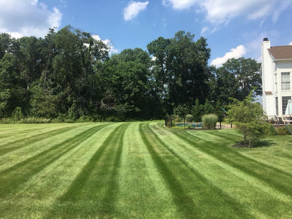 fresh cut grass in backyard
