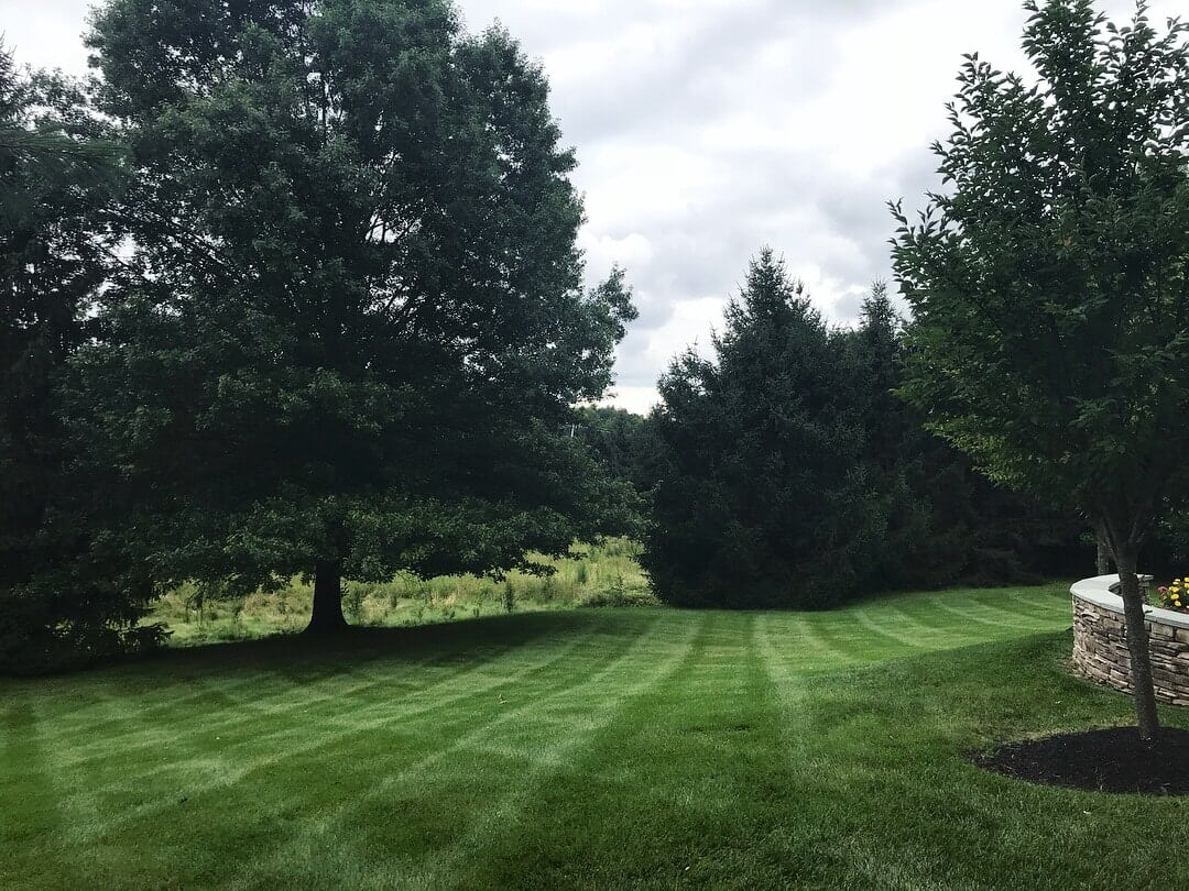Fresh mowed lawn showcasing lines in grass