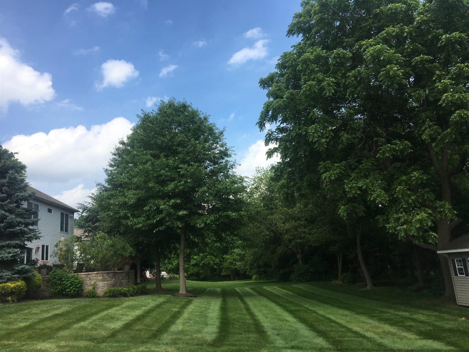 Fresh mowed lawn