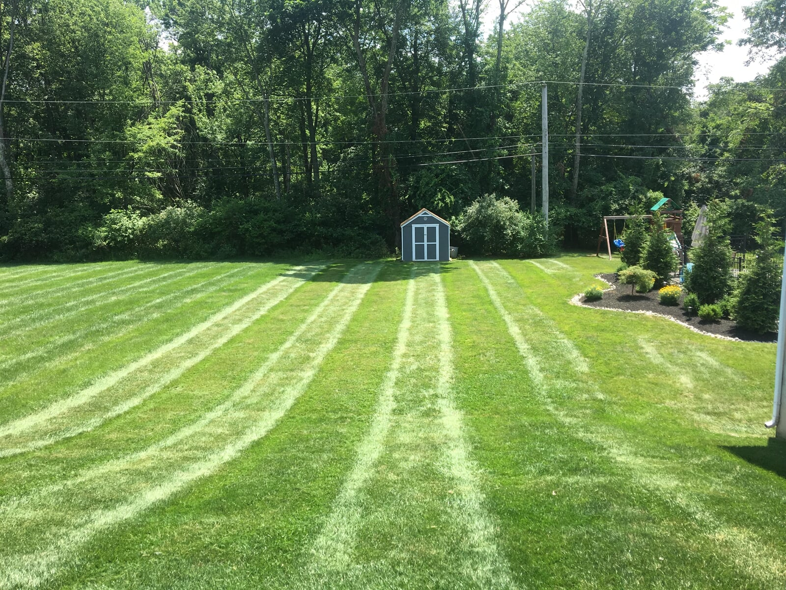 Large field of fresh mowed lawn