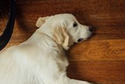 Pet friendly hardwood from Carpets Unlimited for your Watkinsville, GA home