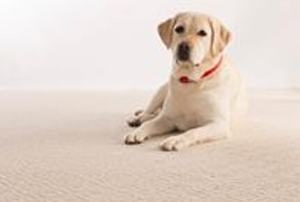 Pet friendly carpet from Carpets Unlimited for your Athens, GA home
