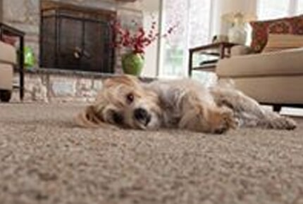 Soft plush carpet in Watkinsville, GA from Carpets Unlimited
