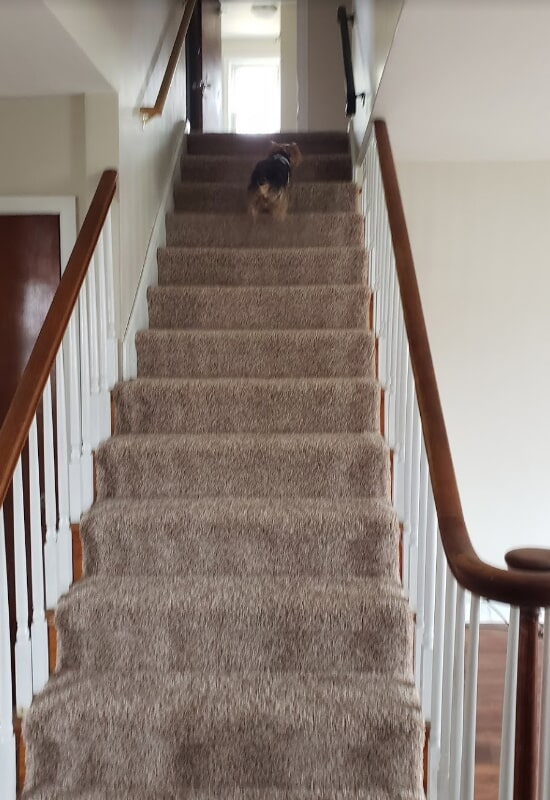 Carpeted stairs from Olden Carpet and Flooring in Bensalem, PA