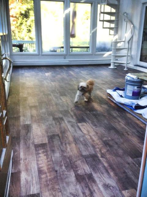 Pet friendly flooring in Nashua, NH from ADF Flooring LLC
