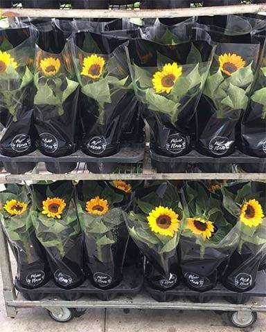 Embalagens Plásticas Personalizadas Lisas ou com Flexografia para Flores