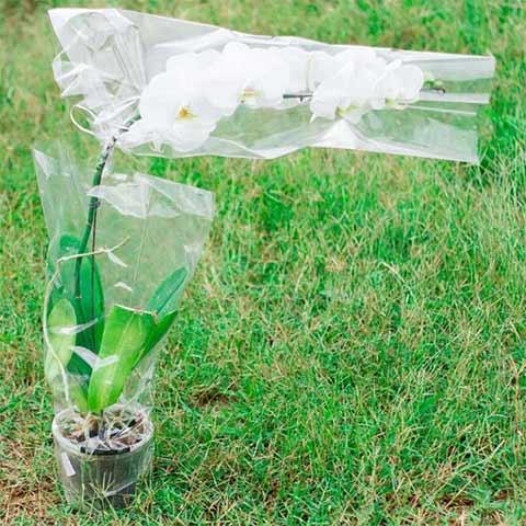 Embalagens lisas para flores