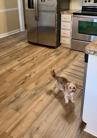 Pet friendly kitchen flooring in Wilson, NC from Richie Ballance Flooring & Tile