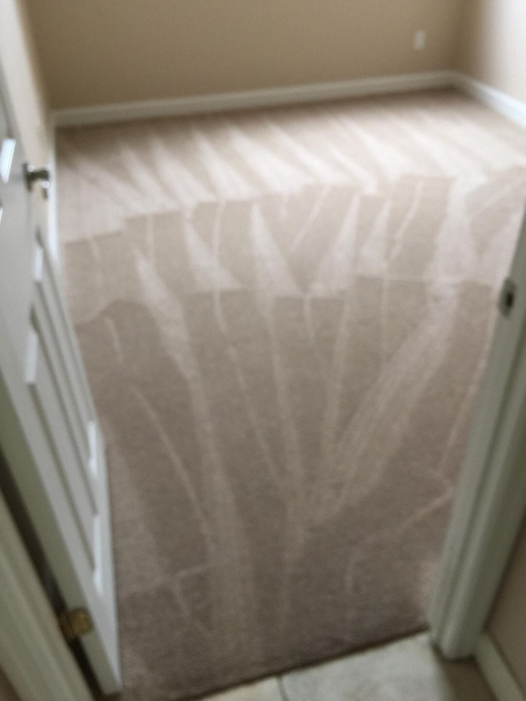 Fresh carpet in Bradenton, FL from Paradise Floors and More