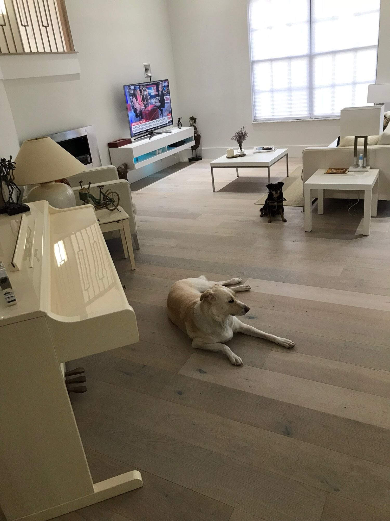Pet-friendly hardwood in West Palm Beach, FL from Floors For You Kitchen & Bath