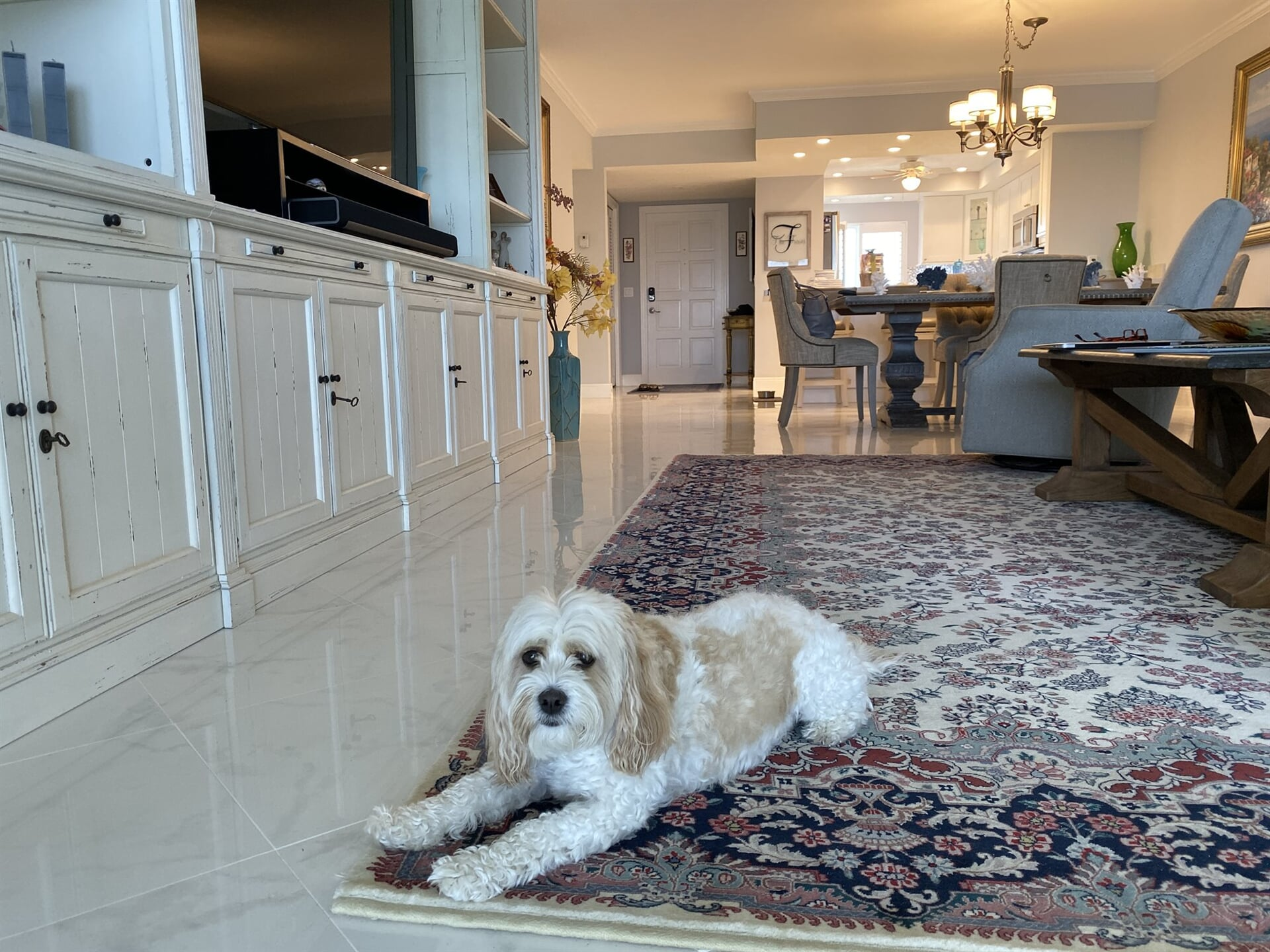 Pet-friendly flooring in Jupiter, FL from Floors For You Kitchen & Bath