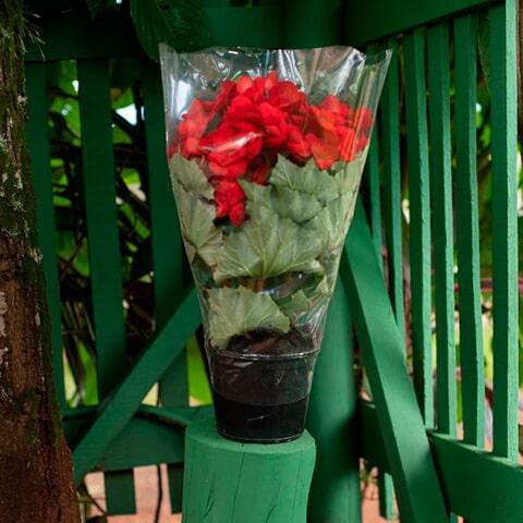Embalagens para flores