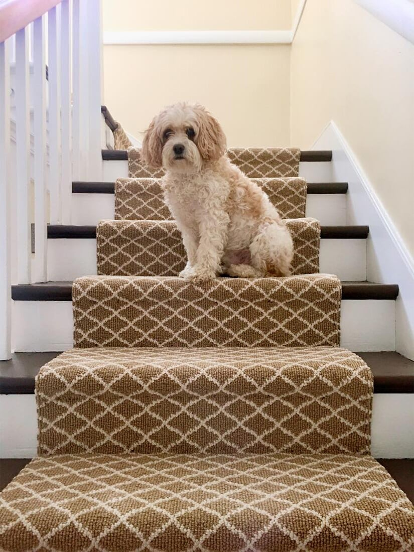 Carpet stair runner in Myerstown, PA from Nolt's Floor Covering, Inc.