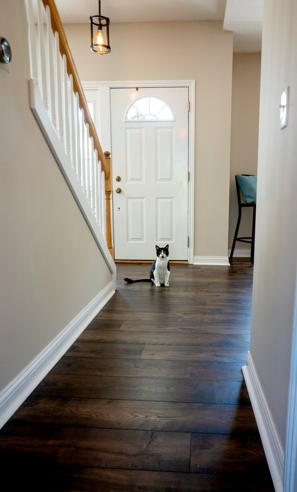Pet-friendly flooring in Lansing, MI from Absolute Floor Covering