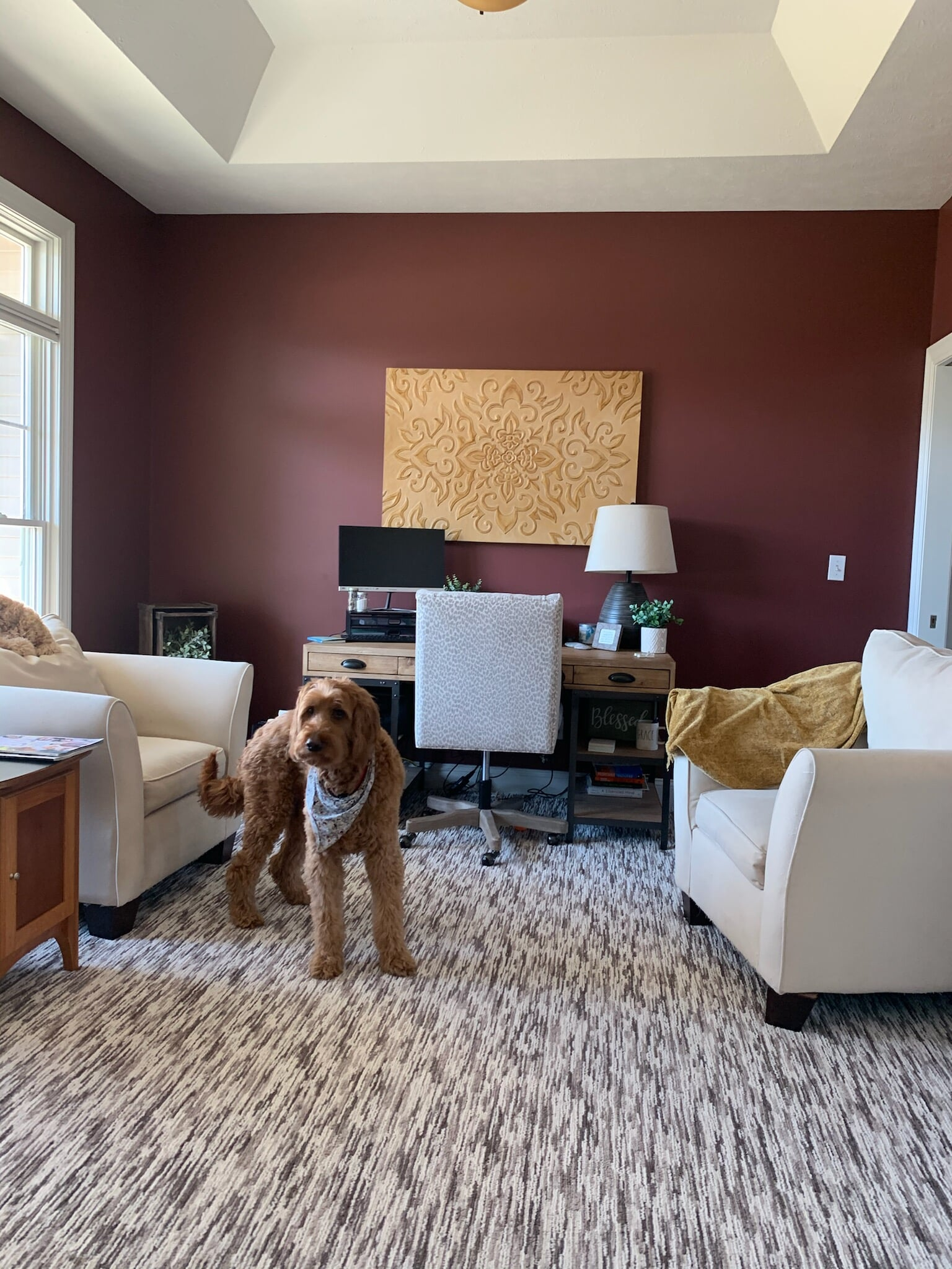 Pet-friendly carpet in Grand Rapids, MI from Absolute Floor Covering