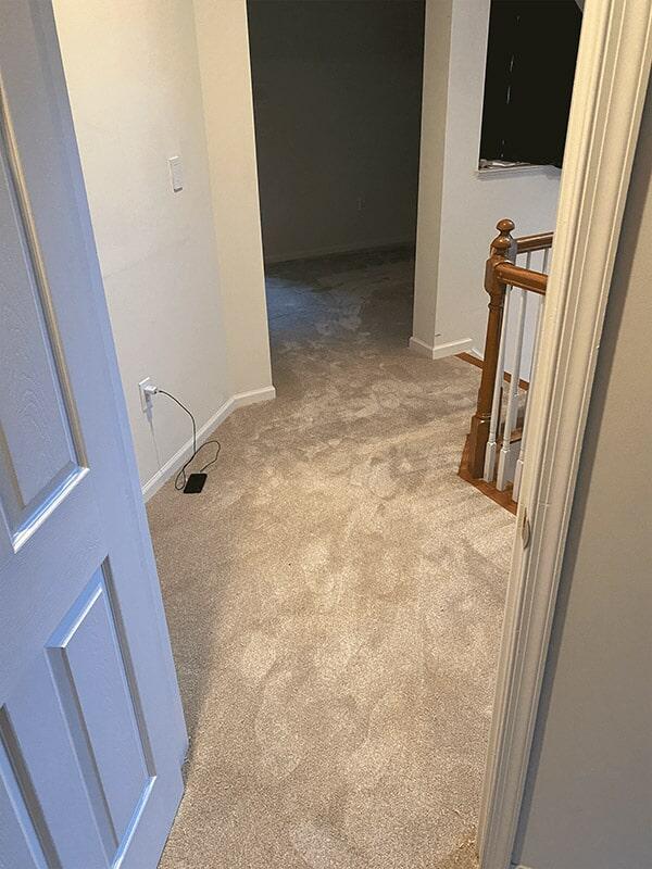 Carpet floors in Arlington, VA from Carpet & Floor Express
