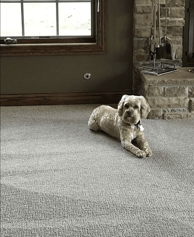 Pet-friendly carpet in Saint John, IN from Yancey's House of Carpets